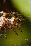Image 7/7 : tinyspider.jpg