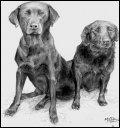 Image 1/8 : dogs.jpg