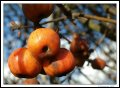 Image 6/57 : l_berries.jpg