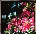 Image 67/70 : DSCF5719.jpg
